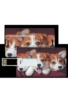 Cute Puppies Credit Card Pen Drive
